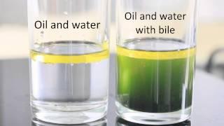 Emulsifying Effects of Bile