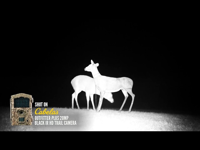 Actual Wild Game Footage | Outfitter Plus 20MP Black IR HD Trail Camera