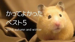 【ハムスター/キンクマ】かってよかったベスト5/I-love best 5. thumbnail
