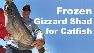 Does Frozen Shad Work for Catfish Bait ?