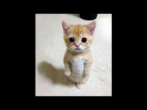 The CUTEST KITTENS  you'll see today! | The Best Cat Video Ever 😍