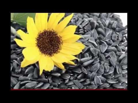 Сафлор красильный: характеристика и секреты выращивания