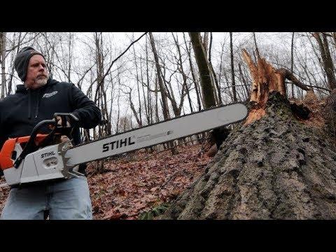 #312 HUGE OAK Vs HUGE MS 880 Magnum