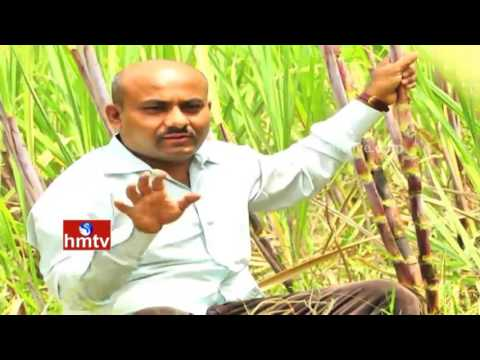 Young Ideal Farmers Use Organic Farming in Crop Cultivation