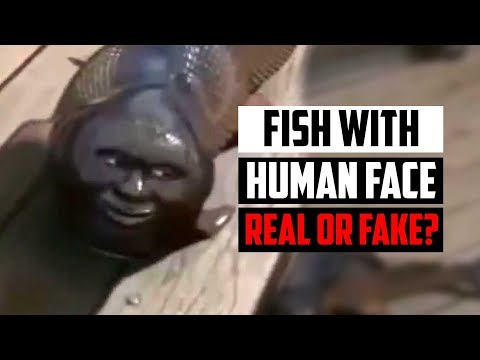 Fish With Human-Face Caught In China - Is It Real?