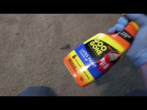 DRY LATEX PAINT and Dog Poop OUT OF CARPET!