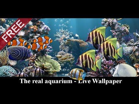 The real aquarium - HD