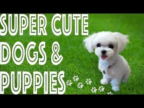 ❤️ Super Cute dogs and puppies SURE to Melt your Heart