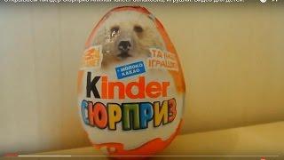 Открываем Киндер Сюрприз AnimalPlanet.Распаковка, игрушки. Видео для детей.