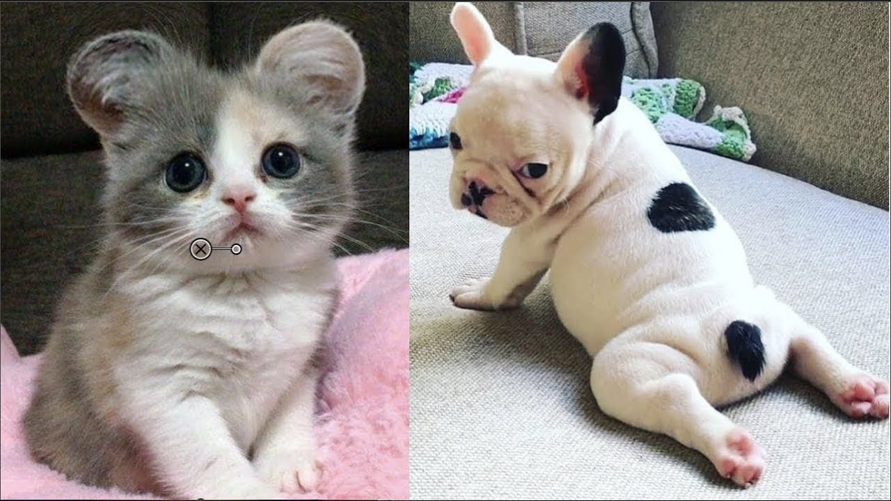 Cutest Baby Dog and Cat - Cute and Funny Dog Videos Compilation #1