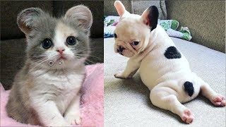 Cutest Baby Dog and Cat  Cute and Funny Dog Videos Compilation #1