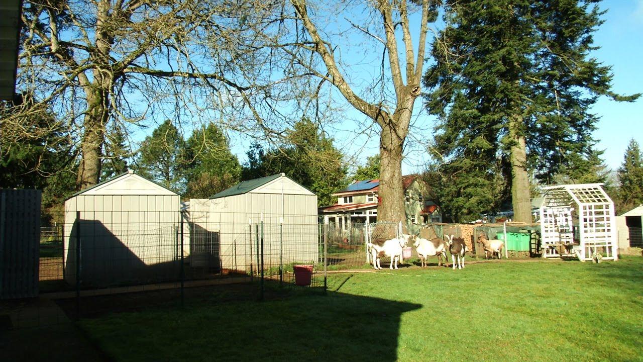 Next Week: Backyard Goats