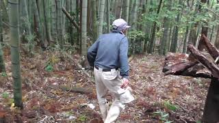 タイトル道り有害駆除一年目の括り罠でのイノシシ捕獲動画です。