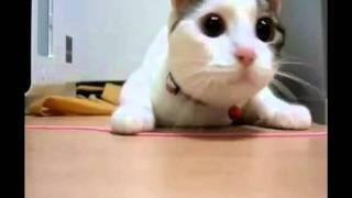 Прикольные коты и кошки