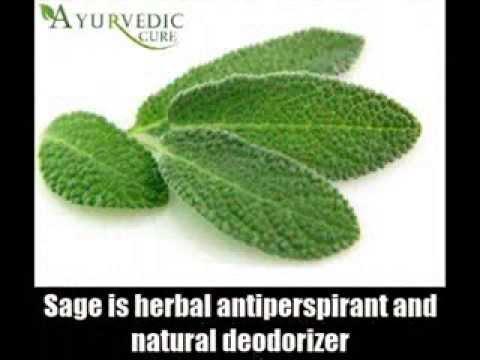 7 Best Herbal Remedies For Body Odor