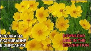 Flowers Free Stock footage + Download link / Цветы футаж + ссылка на скачивание