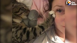 Cat Kneading Is So Satisfying | The Dodo