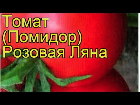 Томат обыкновенный Розовая Ляна. Краткий обзор, описание характеристик, где купить семена