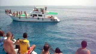 Гигантские дельфины Красного моря (Giant dolphins of Red sea)