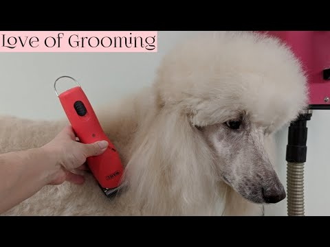 Unboxing, reviewing and using the new Wahl KM Cordless 2 Speed Animal Clipper on a Standard Poodle