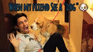Me vs My Friend When We See a DOG. || Harsh Beniwal