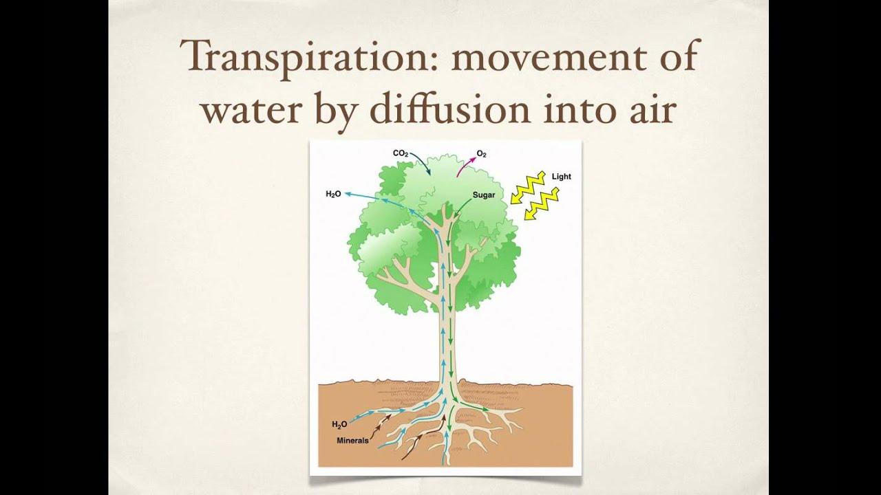 importance of water in plants pdf