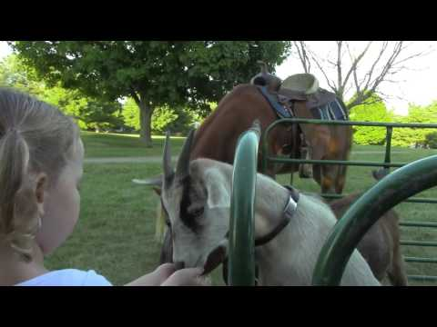 Honey Hill Farm Mobile Petting Zoo & Pony Rides - Animals for Parties Kentucky & Ohio