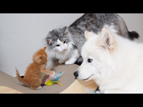 How My Dog And Cat Treat A Kitten