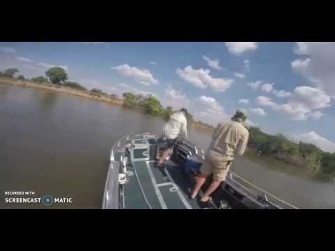 Kingfisher 550 - The Hippo Attack