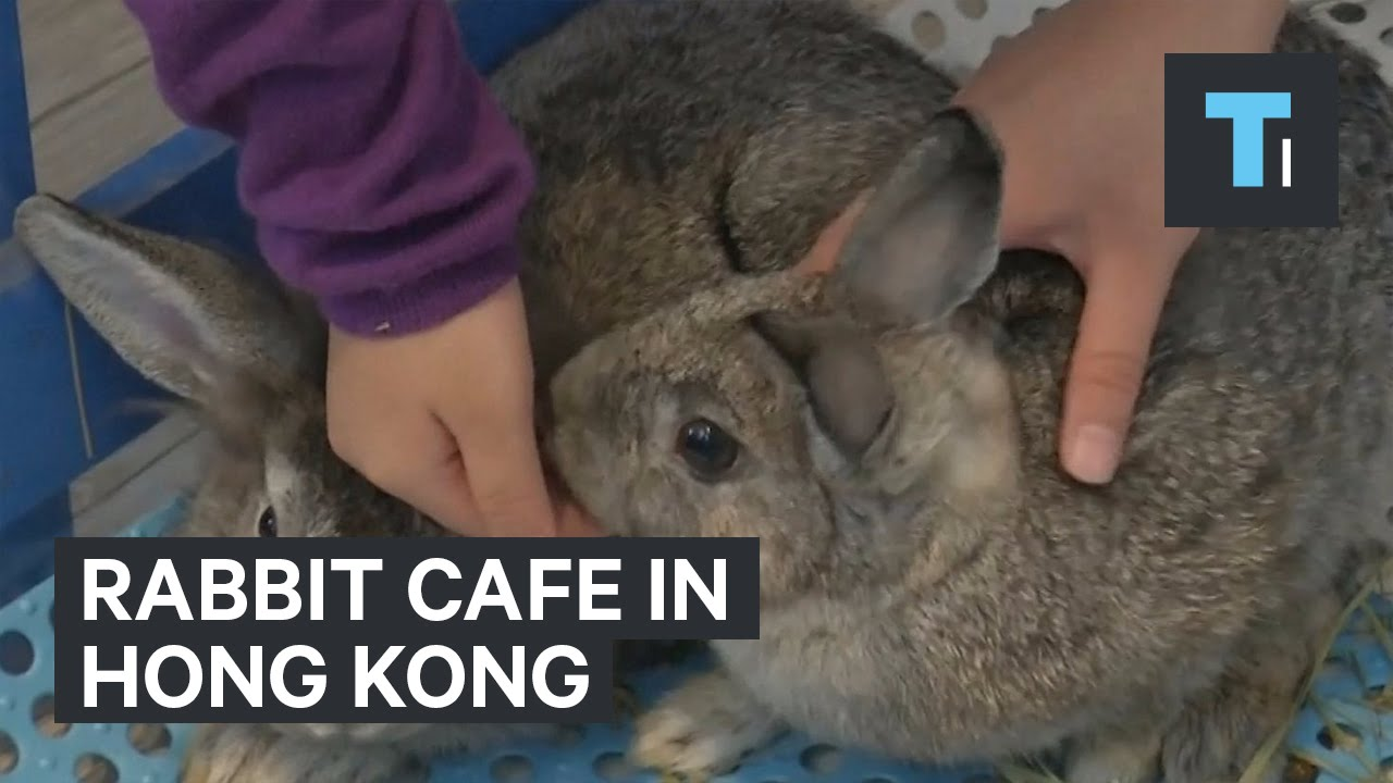 animal cafe hong kong