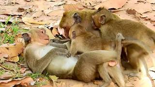 MG, Why Jack Do Like This Small Dee Dee?, Pity Poor Small Female Monkey.
