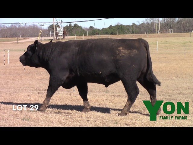Yon Family Farms Lot 29