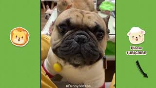 Funny Videos | Funny & Cute Cats and Dogs, Funny Pet Animals Video #2