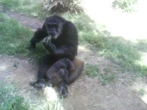 Aaliyanah and Chandler at the Zoo...