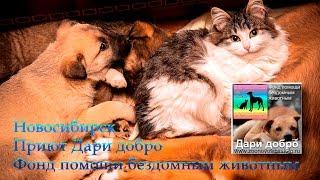 Раздача вкусняшек Приют Дари добро Новосибирск animal shelter asking for help