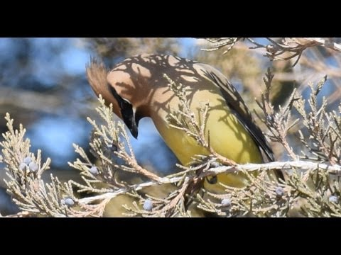 Bird Sights and Sounds: Nebraska - March 23, 2014