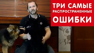 [Урок 3] Три распространенные ОШИБКИ при воспитании щенка