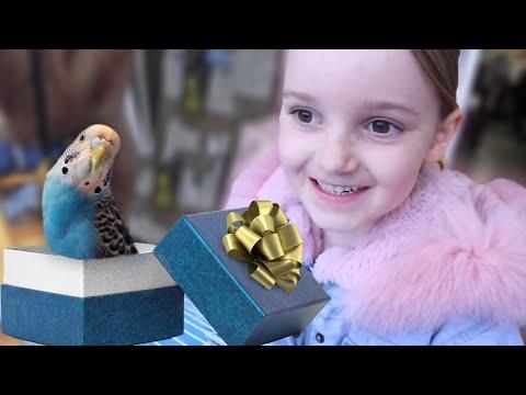 Parrots Shouldn't Be Presents 🎁 (Why I Got A Budgie)