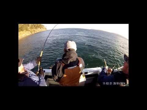 San Juan Islands Blackmouth Fishing 2014