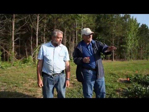 VSU Strawberries - Virginia Cooperative Extension