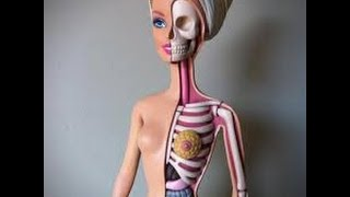 Скелет человека. Урок биологии.