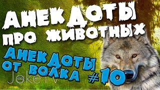 Анекдоты про животных. Анекдоты от Волка #10