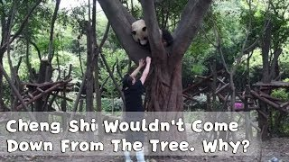 No Matter What The Nanny Did. Cheng Shi Wouldn't Come Down From The Tree | iPanda