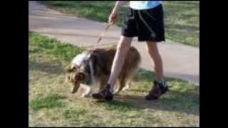 Dog Leash Training 4.