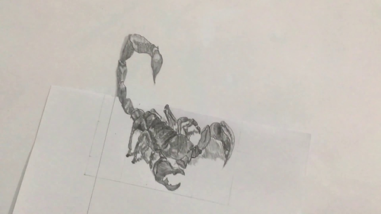 vẽ bọ cạp 3d - how to draw 3d scorpion