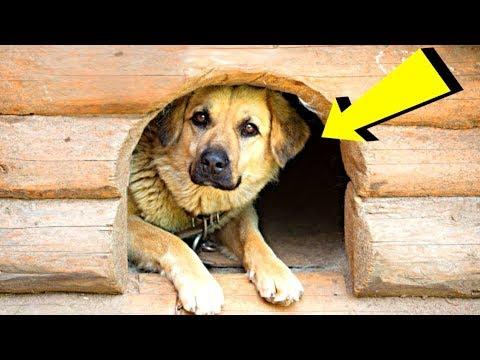 وجد الزوجين كلبًا غريبًا في بيتهم ، كيفية وصوله إلى هناك لا تزال لغزا