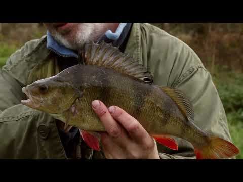 Green And Gold - Seeking Winter Perch On The River Kennet.