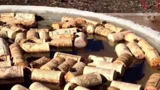 Honey Bee water source with corks.
