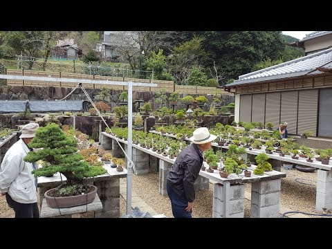 Bonsai Shohin - S1 ep2 : Hiroki Miura baijuen