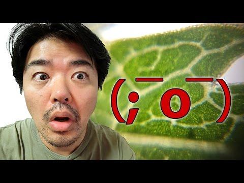 μHandy(ミューハンディ)スマホカメラ装着型モバイル・マイクロスコープ照明内蔵タイプ、シールで顕微鏡!? Taiwan Excellence 提供